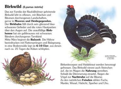 Birkwild