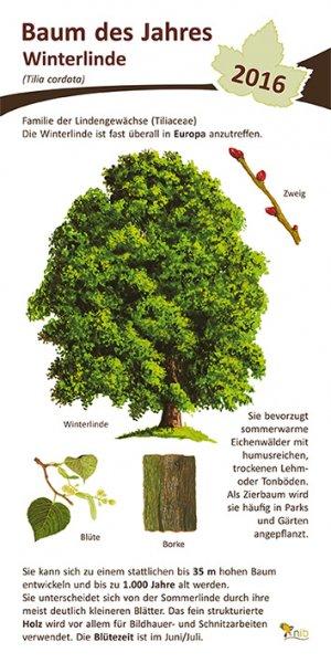 Winterlinde - Baum des Jahres 2016