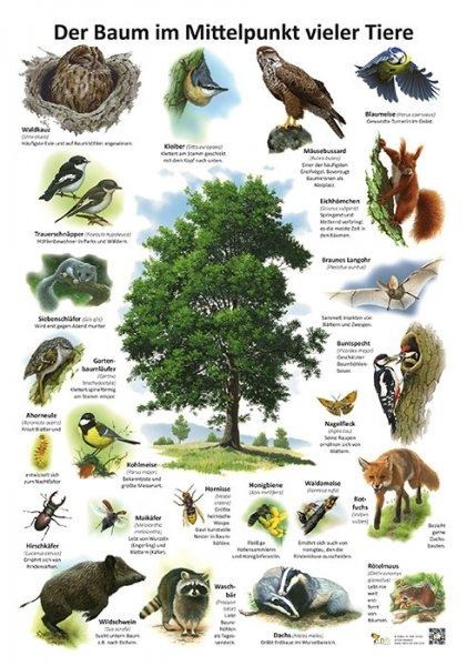 Der Baum - Mittelpunkt vieler Tiere