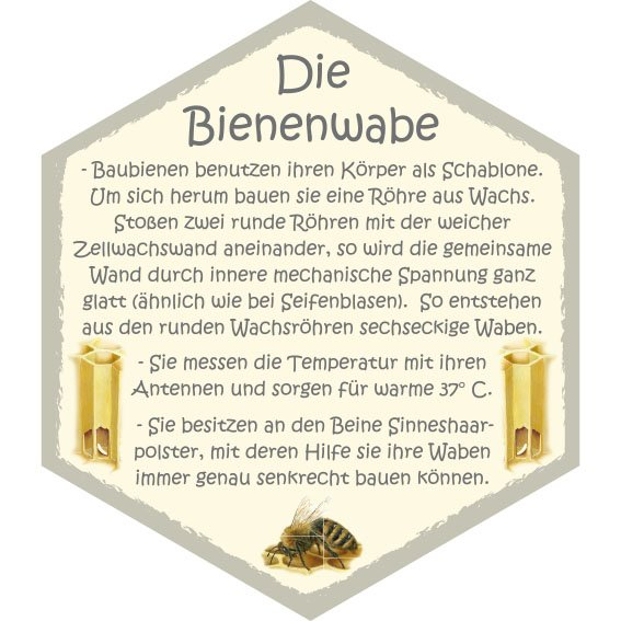 Wabe Bienenwabe