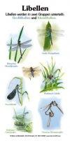 Libellen (6 Arten)