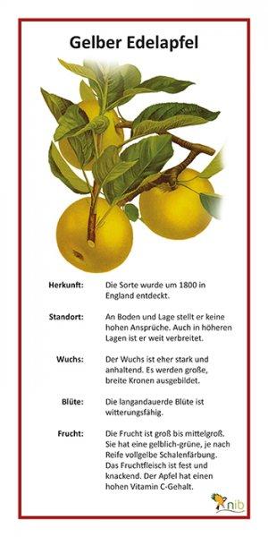 Gelber Edelapfel
