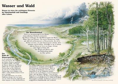 Wasser und Wald