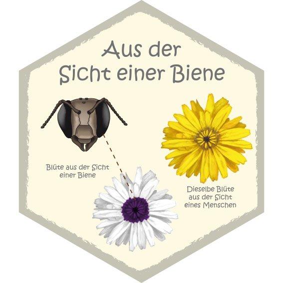 Wabe Aus der Sicht einer Biene