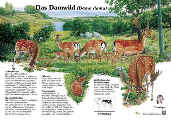 Das Damwild-Copy