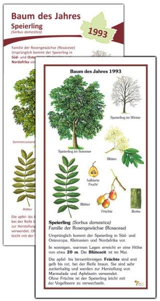 Speierling - Baum des Jahres 1993