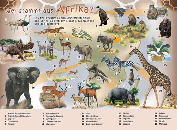 Wer stammt aus Afrika?