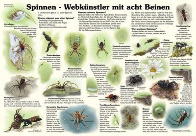 Spinnen - Webkünstler mit acht Beinen