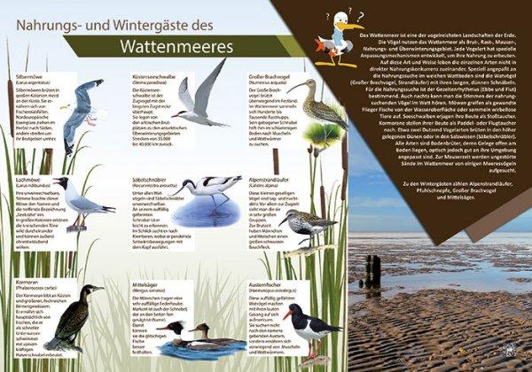 Nahrungs- und Wintergäste des Wattenmeeres