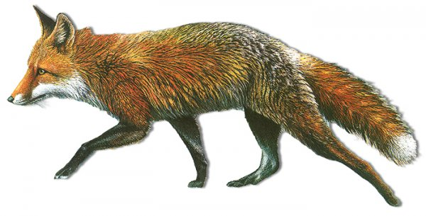 Tiersilhouette - Fuchs