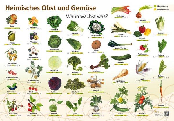 Heimisches Obst und Gemüse - Wann wächst was?