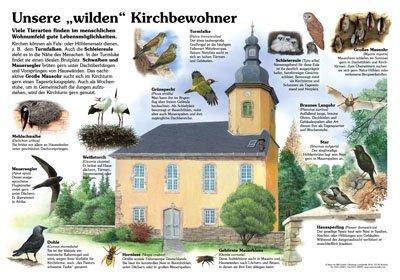 """Unsere """"wilden"""" Kirchbewohner"""