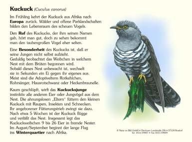 Kuckuck