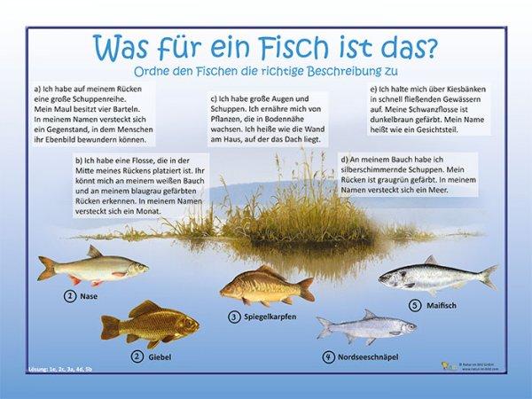 Was für ein Fisch ist das?