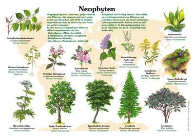 Neophyten