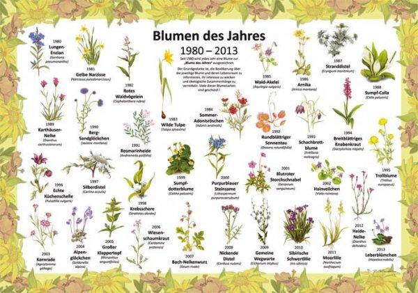 Blumen des Jahres 1980-2019