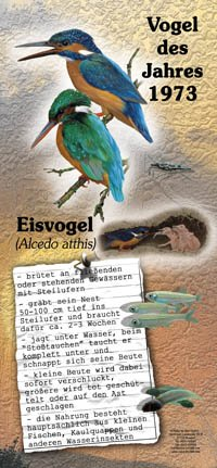 1973 Eisvogel