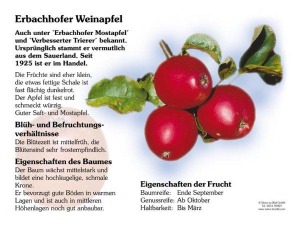 Erbachhofer Weinapfel