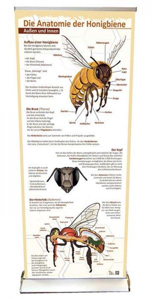 Roll-up-System Anatomie der Honigbiene