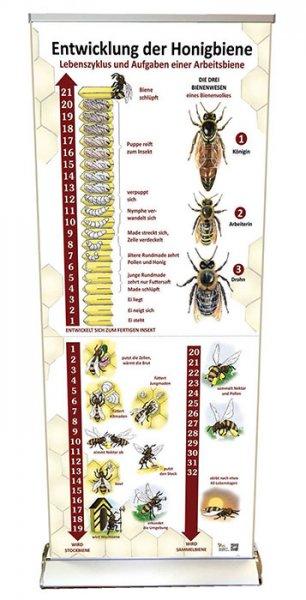 Roll-up-System Entwicklung der Honigbiene