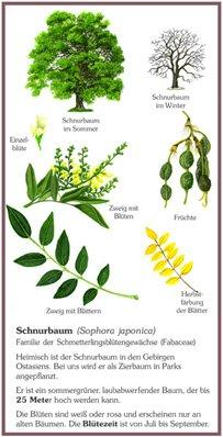 Schnurbaum