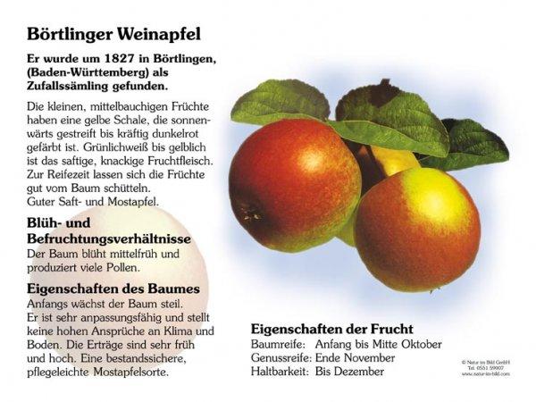 Börtlinger Weinapfel