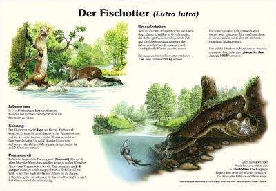 Der Fischotter
