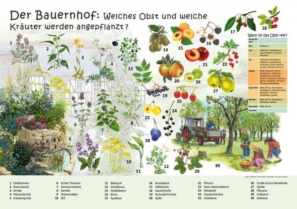 Der Bauernhof - Obst und Kräuter
