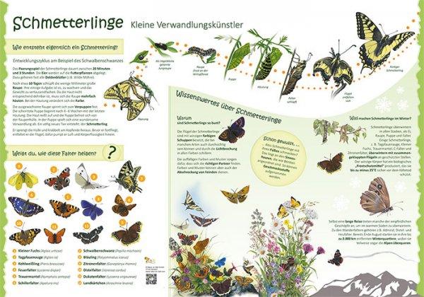 Schmetterlinge - Kleine Verwandlungskünstler