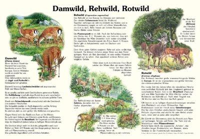 Damwild, Rehwild, Rotwild