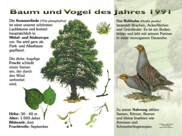 Baum und Vogel des Jahres 1991