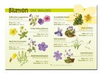 Blumen des Waldes