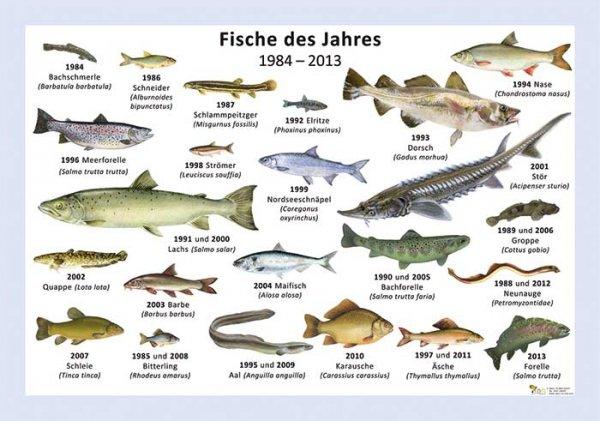 Fische des Jahres 1984-2013