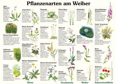 Pflanzenarten am Weiher