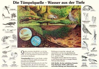 Die Tümpelquelle - Wasser aus der Tiefe