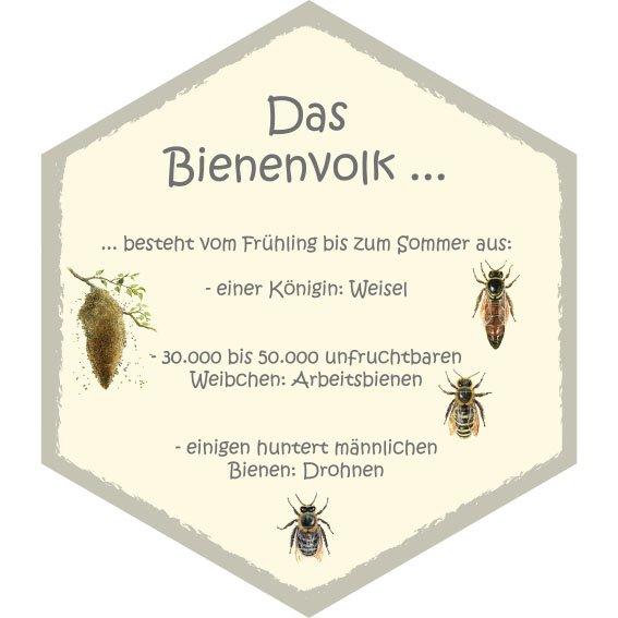 Wabe Bienenvolk