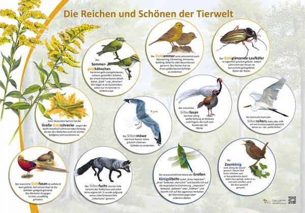 Die Reichen und Schönen der Tierwelt