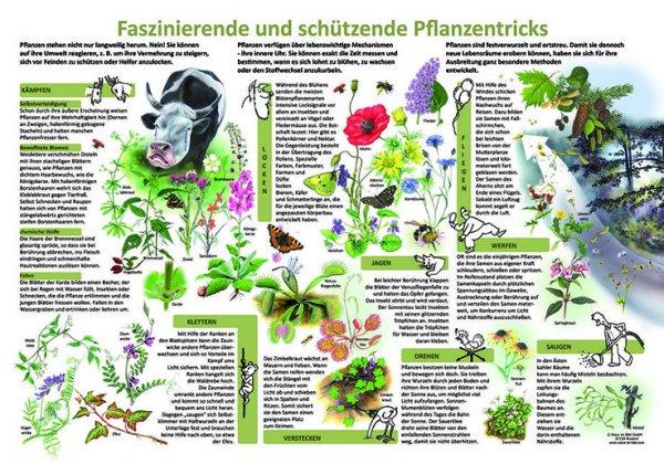 Faszinierende und schützende Pflanzentricks