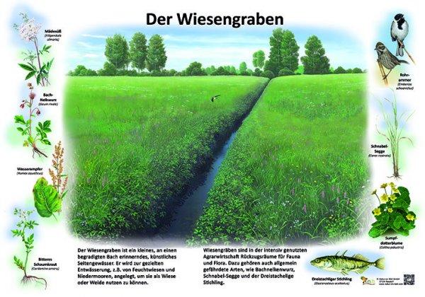 Der Wiesengraben