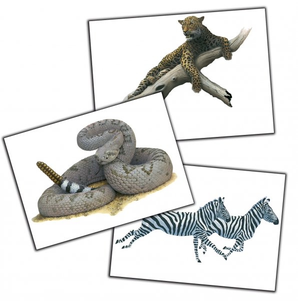Zootiere Wandbilder