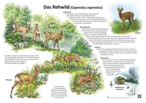 Das Rehwild