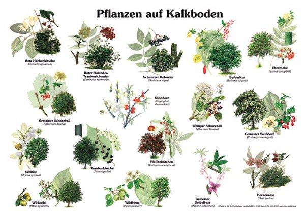 Pflanzen auf Kalkboden