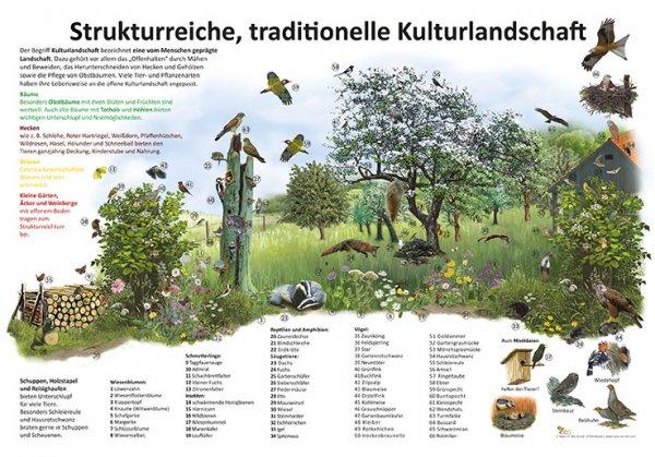 Strukturreiche, traditionelle Kulturlandschaft
