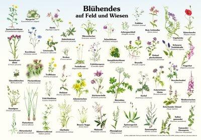 Blühendes auf Feld und Wiesen