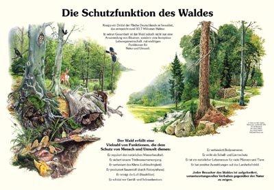 Die Schutzfunktion des Waldes