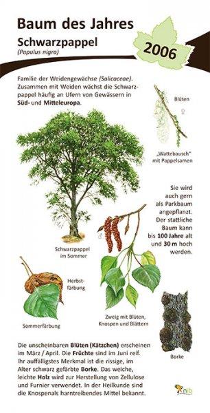 Schwarzpappel - Baum des Jahres 2006