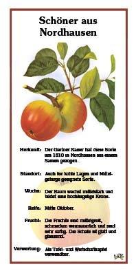 Schöner aus Nordhausen