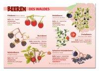 Beeren des Waldes