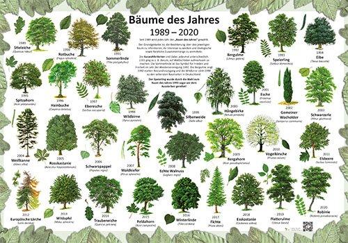 Bäume des Jahres 1989-2020
