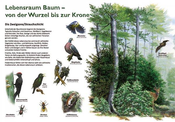 Lebensraum Baum - Zweigzone